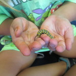 hands with caterpillar-2